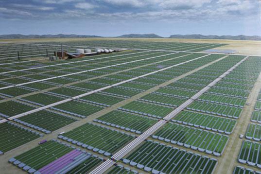 Biodiesel Dari Algae